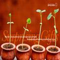 Stewardship Materials 2013
