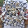Oyster Mat