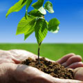 purchase trees for planting