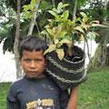 Plant a Tree in Peru